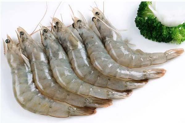 白虾.jpg