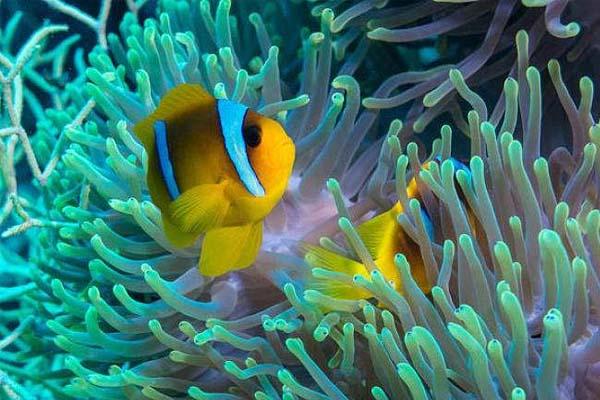 海葵和它的好搭档.jpg
