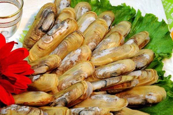 海蚬|SEA SHELL