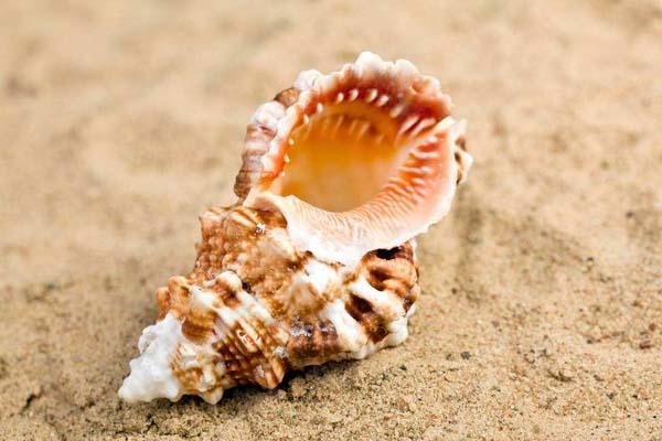 海螺|CONCH