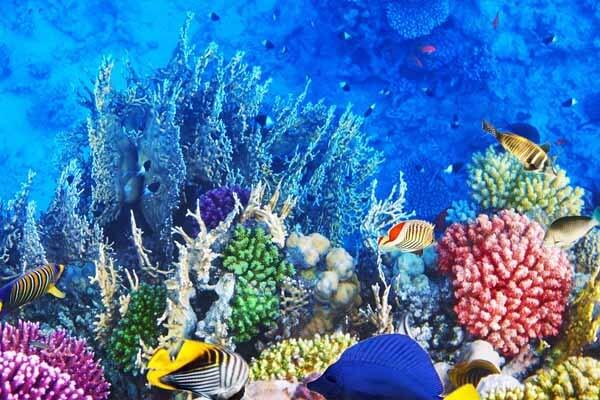 奇妙的海底世界